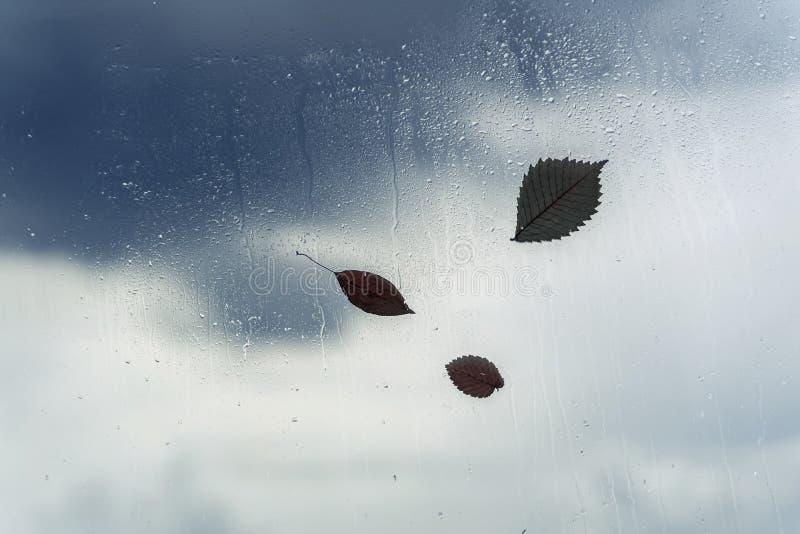 Regendalingen op nat venster en gevallen bladeren erachter Concept regenachtig weer, de herfst abstracte achtergrond stock afbeelding