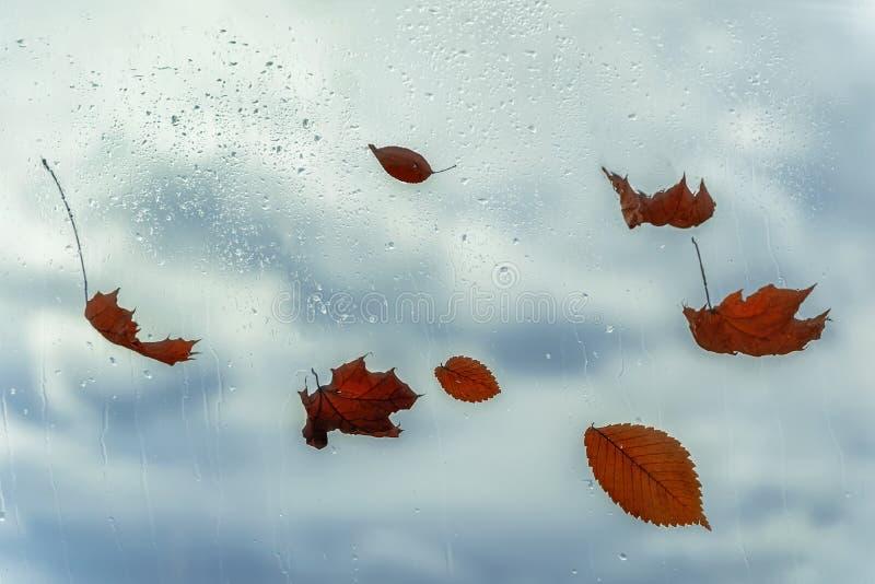 Regendalingen op nat venster en gevallen bladeren erachter Concept regenachtig weer, seizoenen, de herfst abstracte achtergrond stock afbeelding