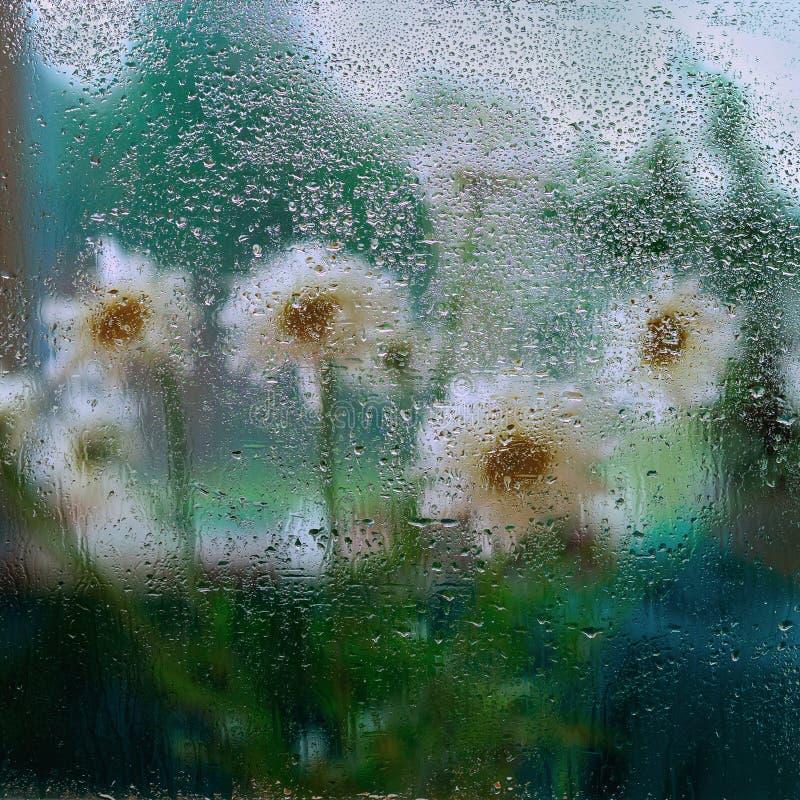 Regendalingen op nat venster en witte bloemen achter nat glazen venster, regendruppels Concept regenachtig weer, moderne seizoene stock foto