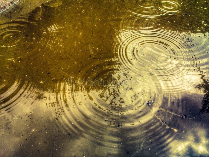 regendruppels stock afbeeldingen