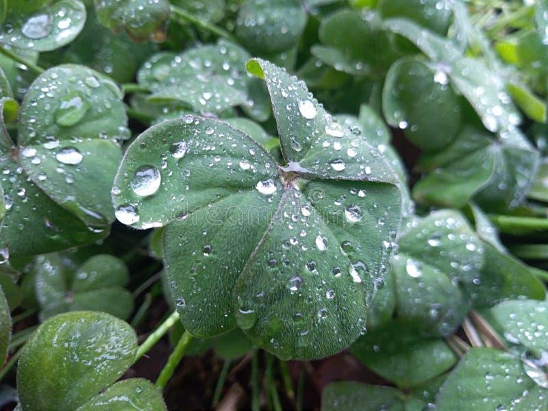 Regendruppels op bladeren stock afbeeldingen