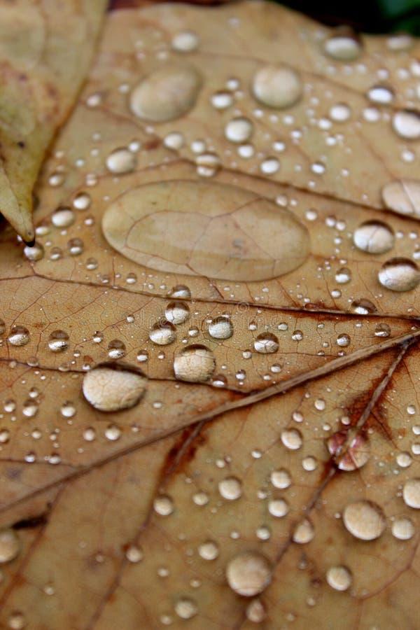 Regendruppels op de herfstbladeren royalty-vrije stock afbeeldingen
