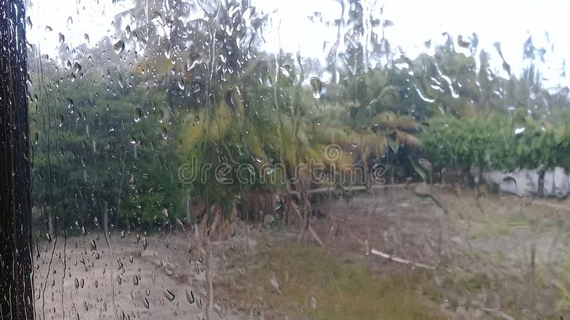 Regendruppels op het venster en de palmen royalty-vrije stock fotografie