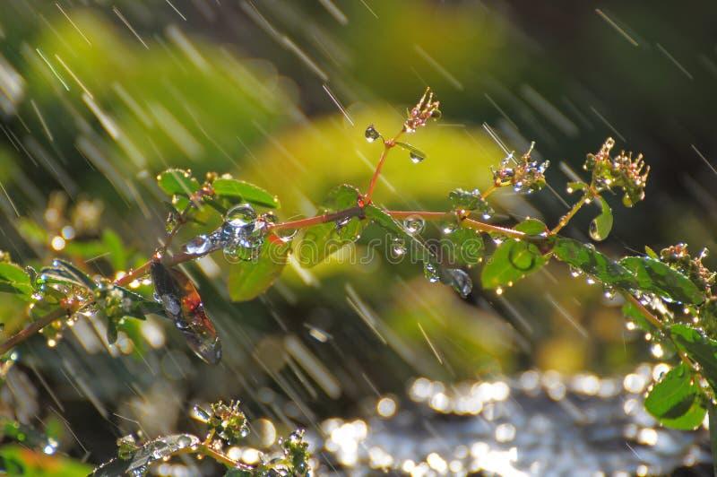 regendruppels op installatie bij mijn tuin stock fotografie