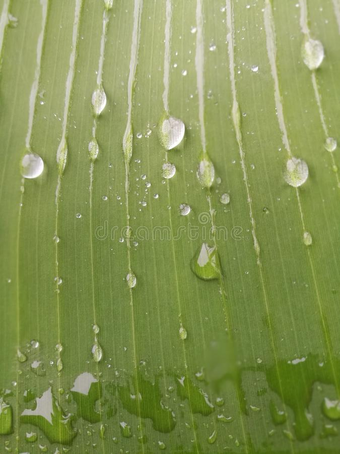 Regendruppeltje stock afbeelding