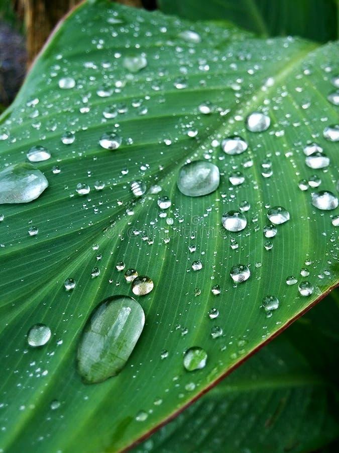 Regendruppeltjes op blad stock afbeeldingen