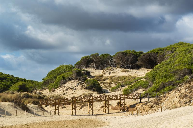 Sand dune regeneration reserve on the beach of Cala Mesquida Majorca Spain royalty free stock photography