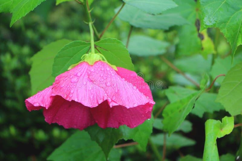 Regenschirm/Blume lizenzfreie stockfotos