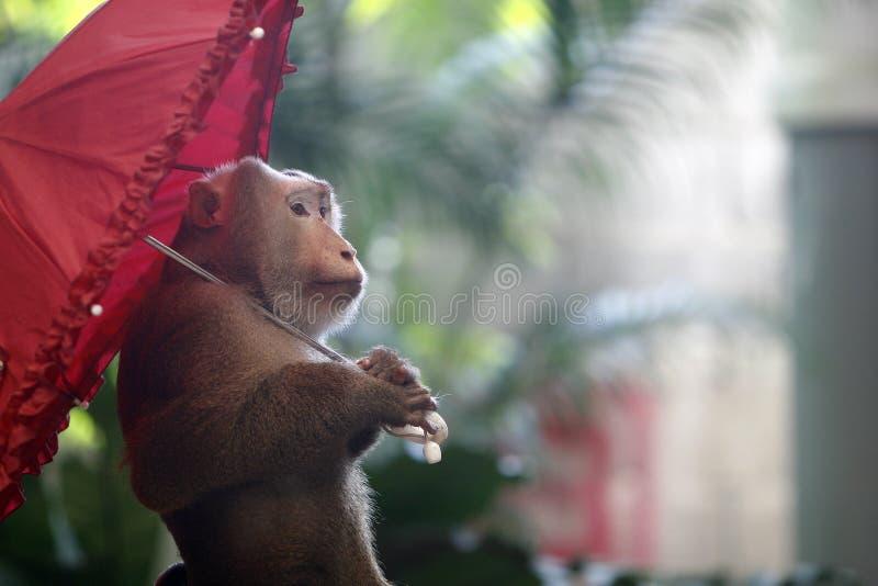 Regenschirm und Fallhammer stockfotografie