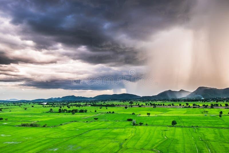 Regensturmfall-Gebirgsreis-Grünfeld stockfotos
