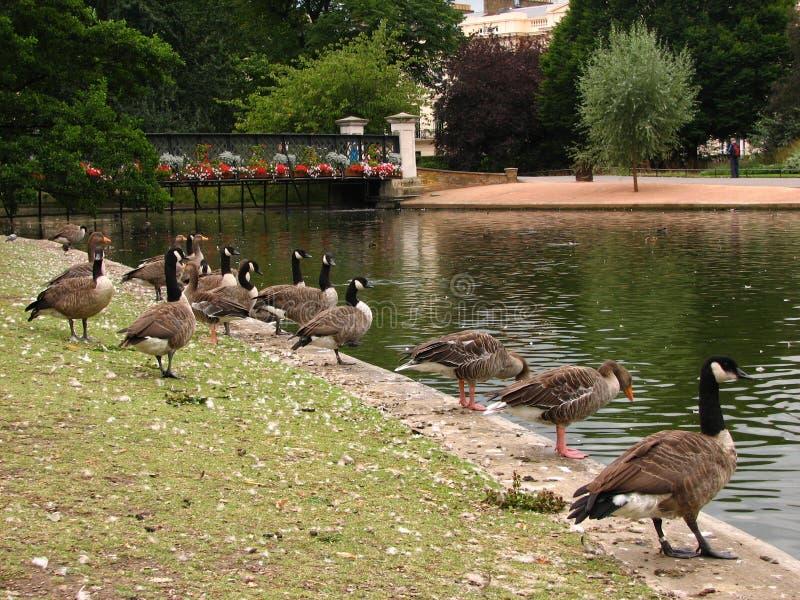 Regent Park, Londres, 2005 foto de stock royalty free
