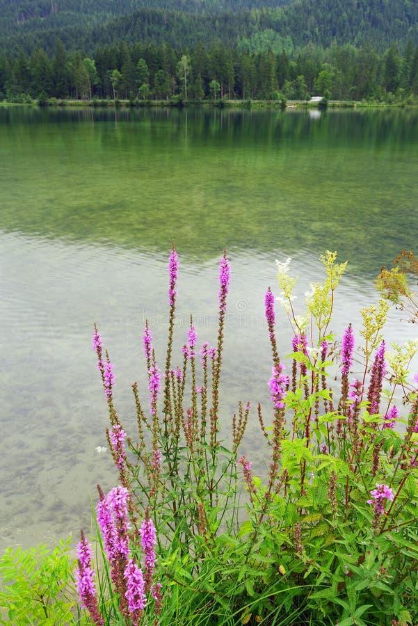 Regentag am Hintersee, Bayern, Deutschland lizenzfreie stockbilder