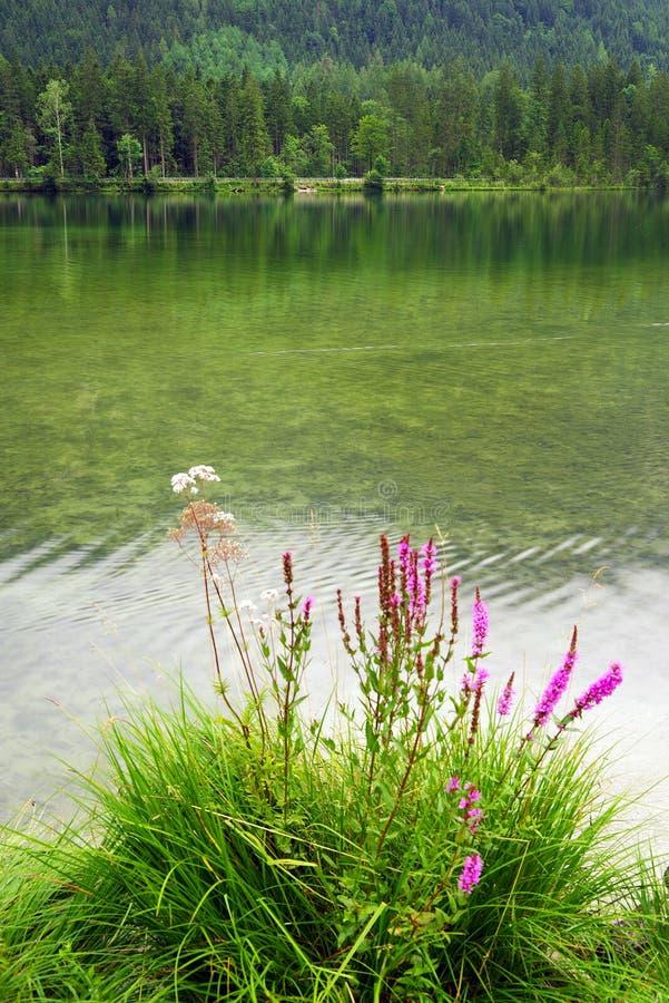 Regentag am Hintersee, Bayern, Deutschland stockbilder