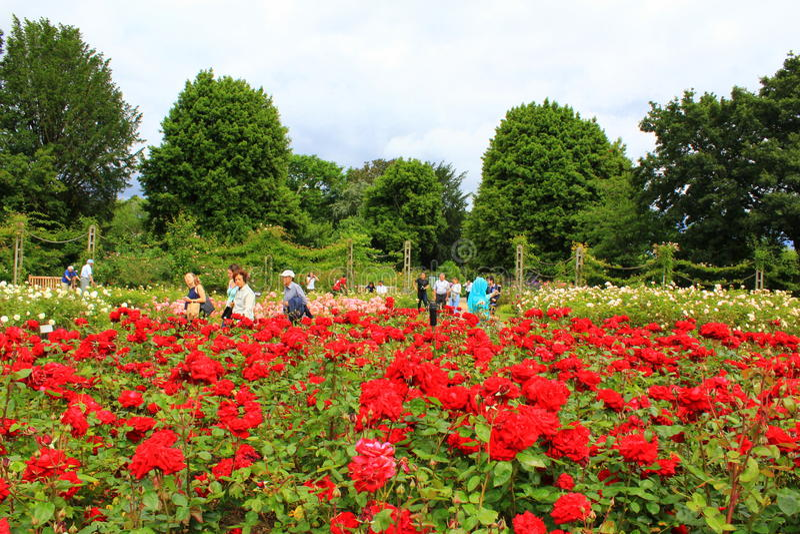 Regenter parkerar röda rosblommor London England royaltyfri foto