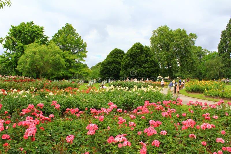 Regenter parkerar rosa trädgårdar London England arkivbilder