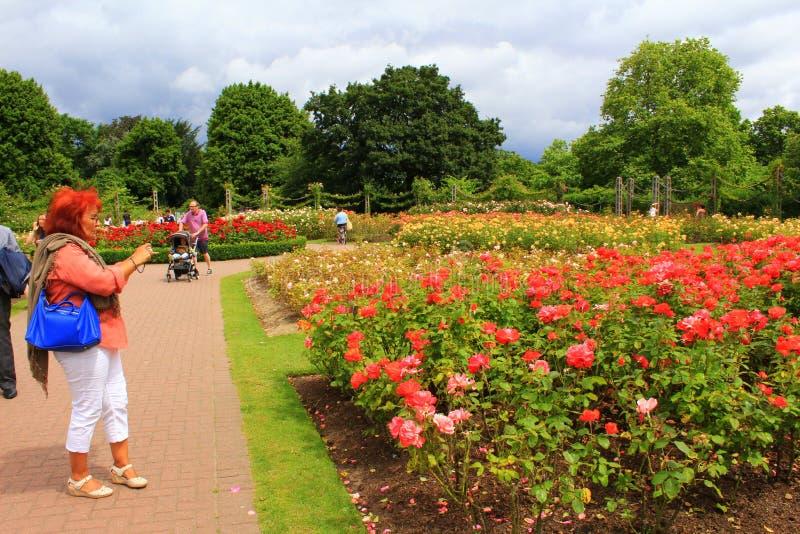 Regenter parkerar rosa trädgårdar London England arkivfoton
