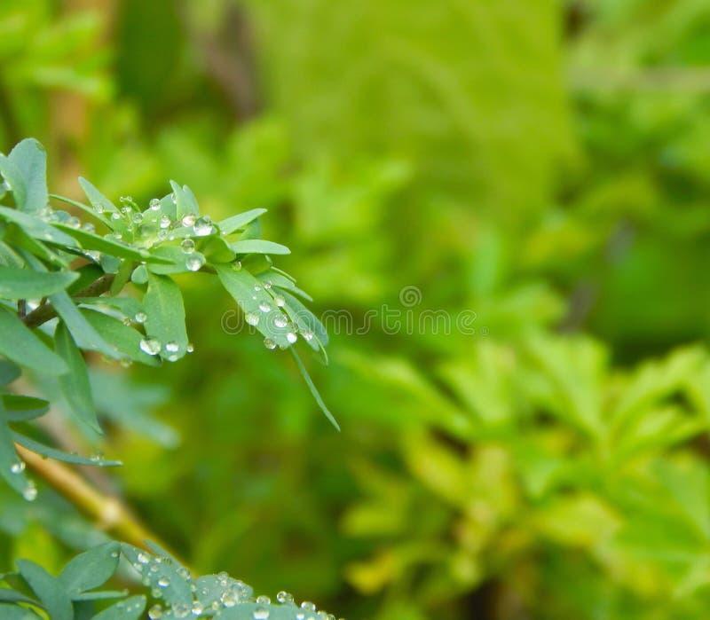 Regentropfen über grünem Hintergrund des Blatttageslichts lizenzfreies stockbild