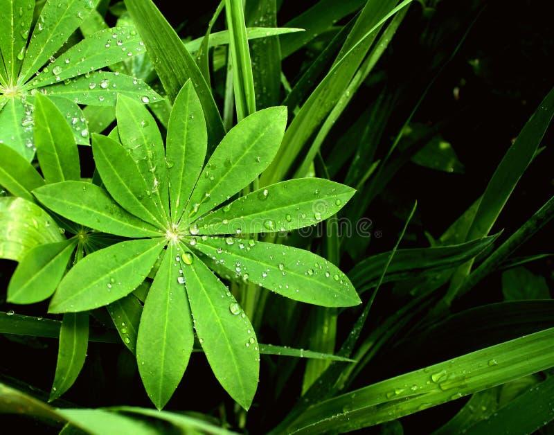 Regentropfen auf Blätter lizenzfreie stockfotos