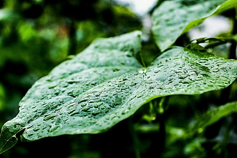 Regentropfen auf Blatt lizenzfreie stockfotografie