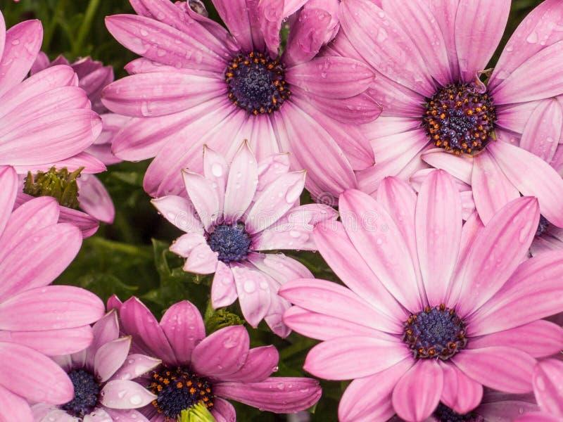 Regentropfen auf Blumenblättern stockfotos
