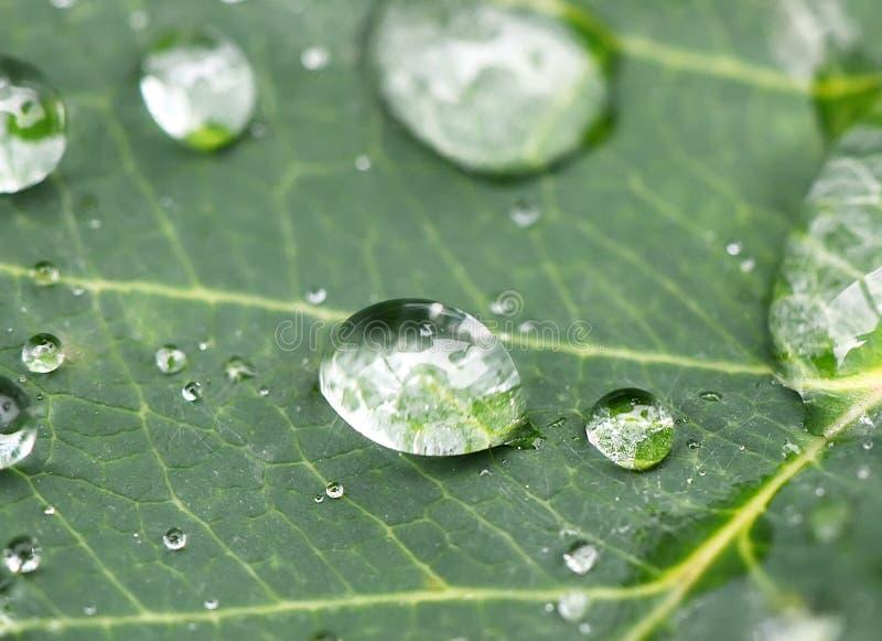 Regentropfen auf einem Blatt stockfotografie