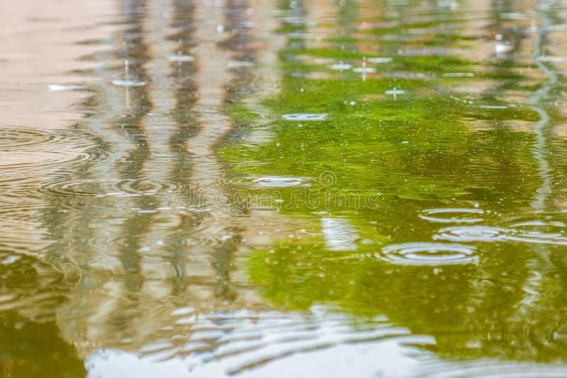 Regentropfen auf einer Wasseroberfläche mit Grün und Gebäudereflexionen lizenzfreies stockfoto