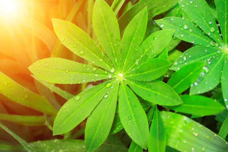 Regentropfen auf grüne Blätter lizenzfreies stockbild