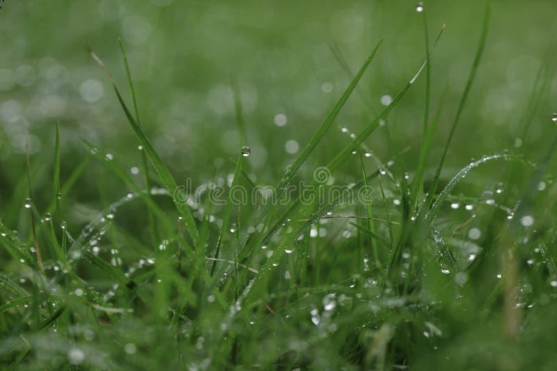 Regentropfen auf Gras stockbilder