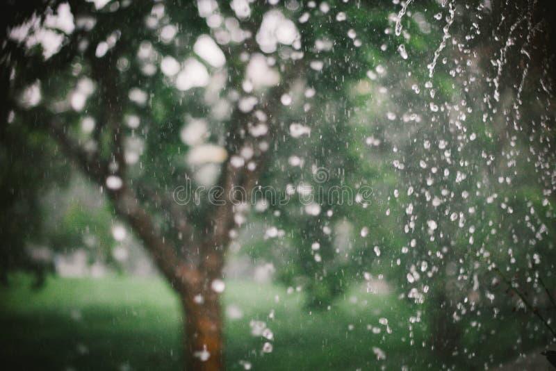 Regentropfen auf Naturhintergrund stockfotografie