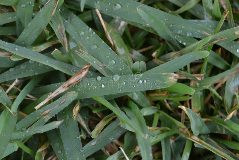 Regentropfen, die auf grünem Gras sitzen stockbilder