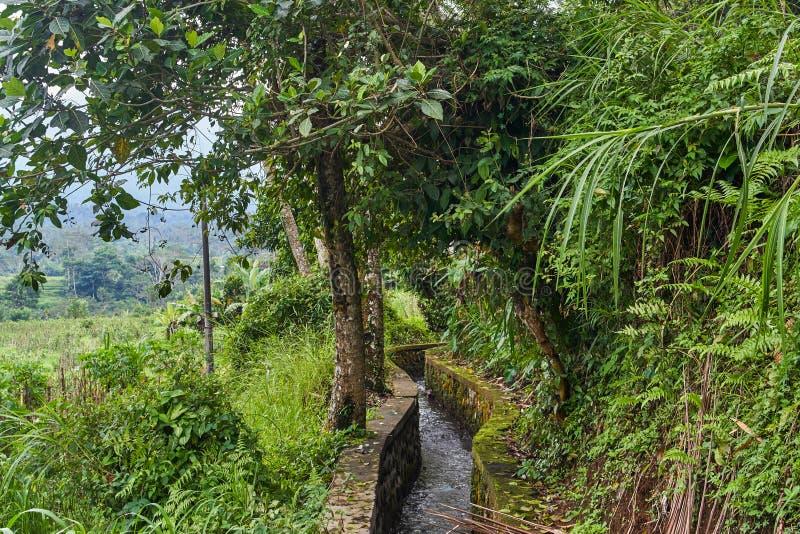 Regenval in de bergen van Indonesië stock foto's