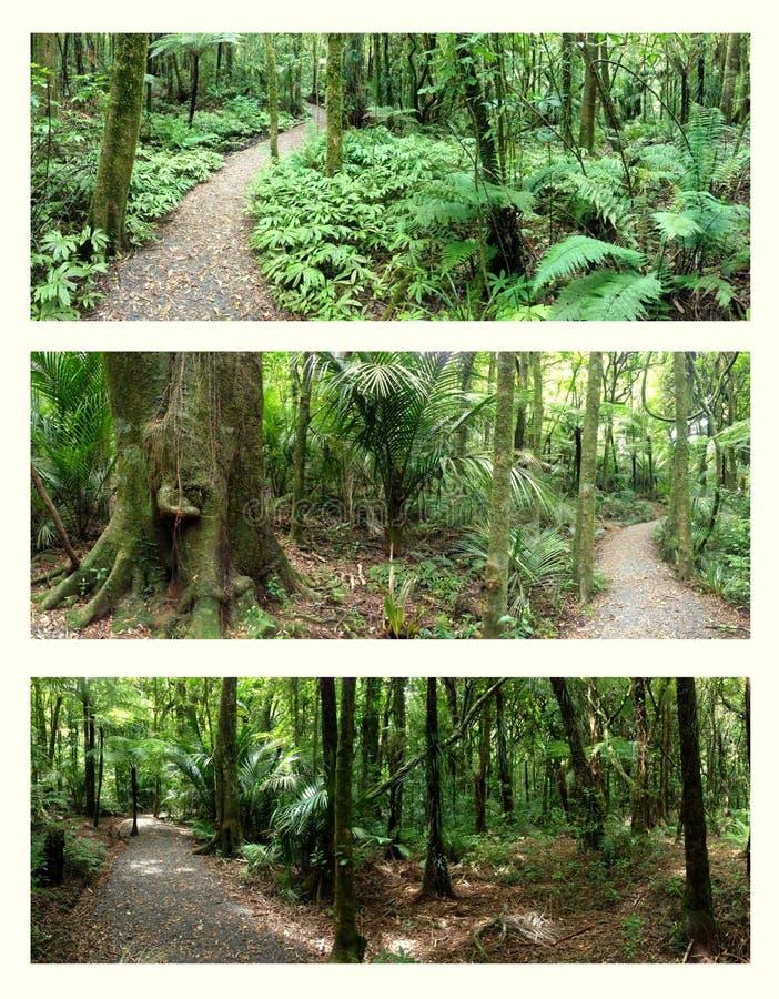 Regenwälder stockfotos