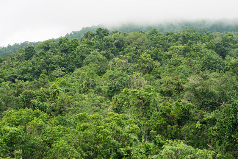 Regenwald-Überdachung lizenzfreie stockfotografie