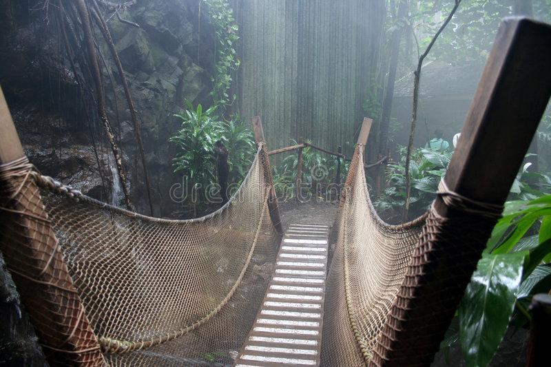 Regenwald lizenzfreies stockbild