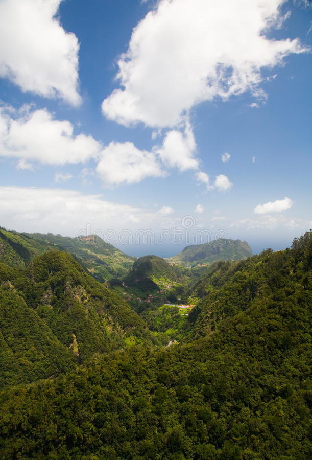 Regenwald stockfoto