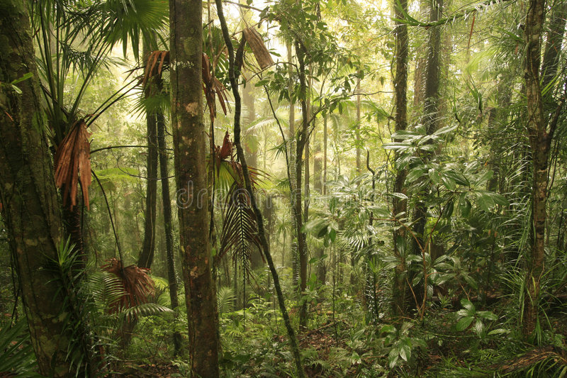 Regenwald lizenzfreie stockfotografie