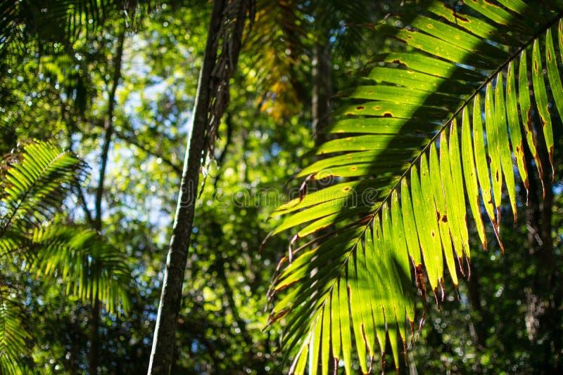 Regenwald auf dem Gold Coast von Australien stockfoto
