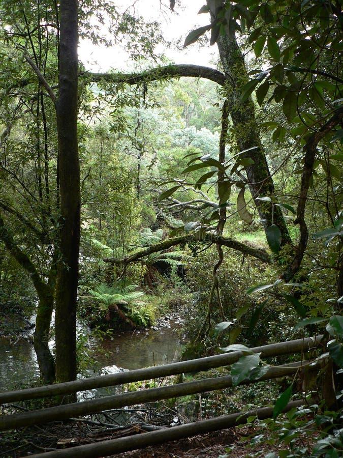 Regenwald-Bäume und Fluss lizenzfreie stockfotografie