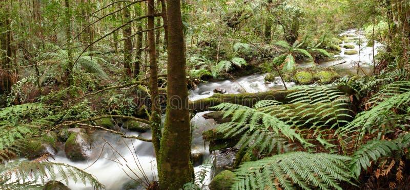 Regenwald-Fluss-Panorama stockbilder