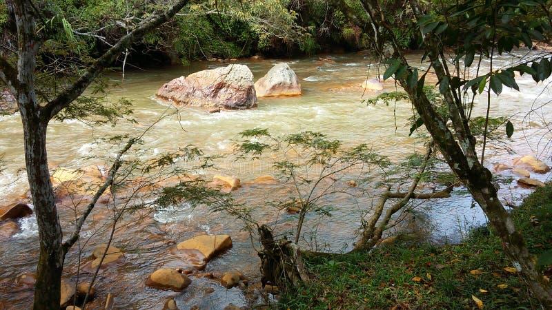 Regenwald-Flussufer lizenzfreies stockfoto