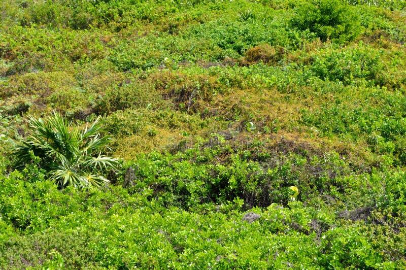 Regenwald-Hintergrund stockfotografie