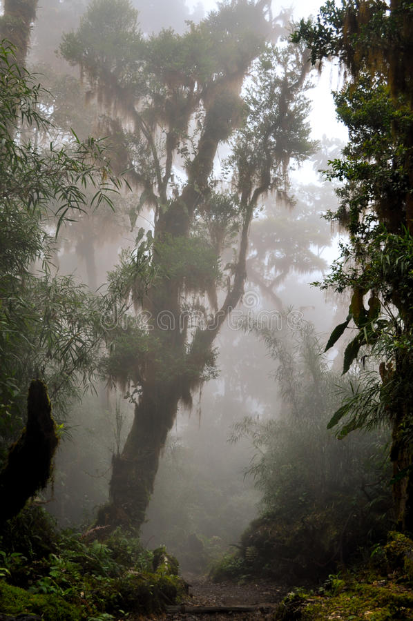 Regenwald im Nebel lizenzfreie stockfotos