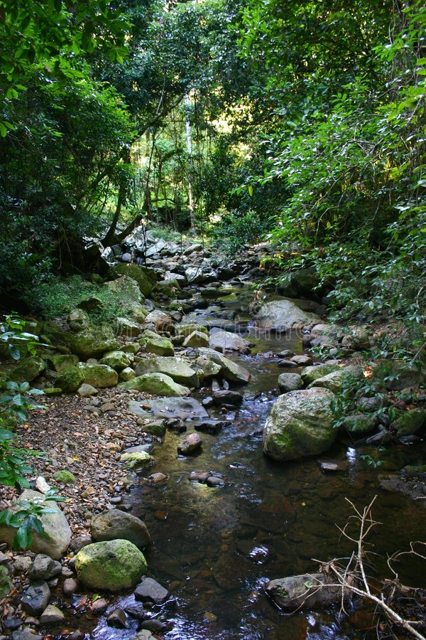 Regenwald-Nebenfluss stockbild