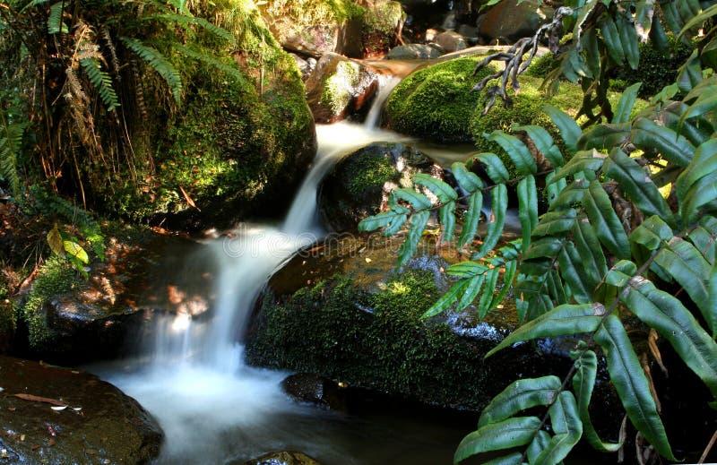 Regenwald-Nebenfluss lizenzfreies stockfoto