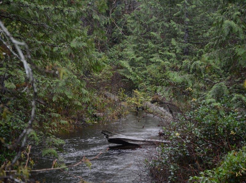 Regenwald-Reflexionen lizenzfreies stockfoto