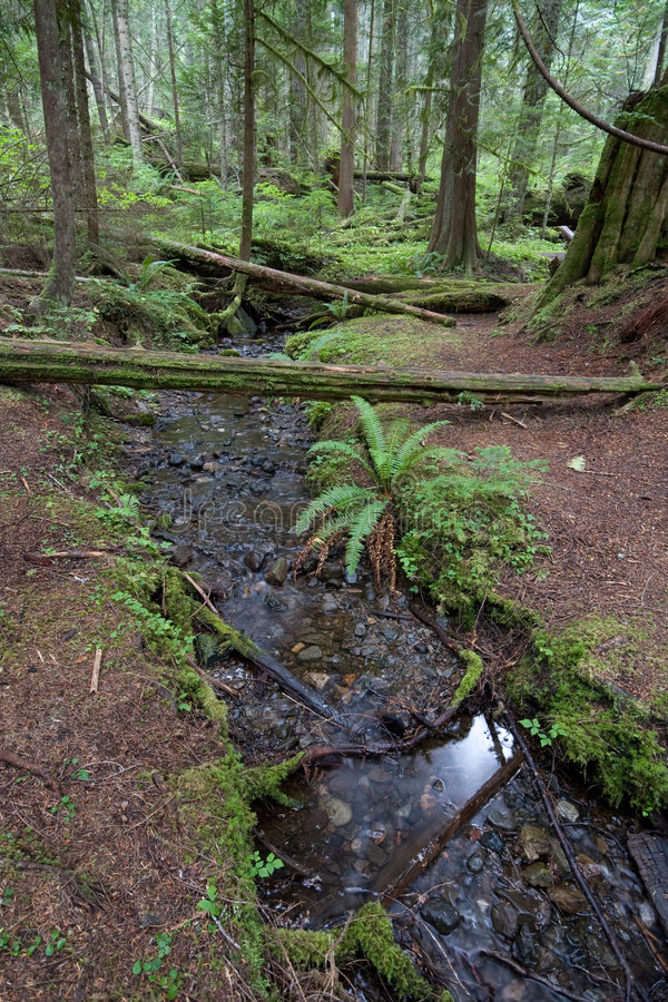 Regenwald-Strom stockfotografie