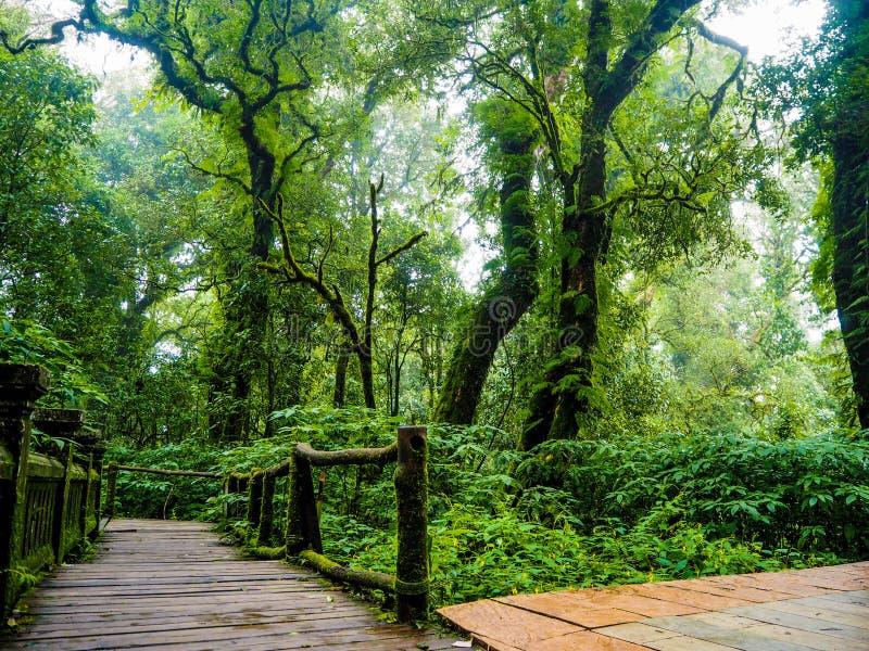 Regenwald in tropischem stockbilder