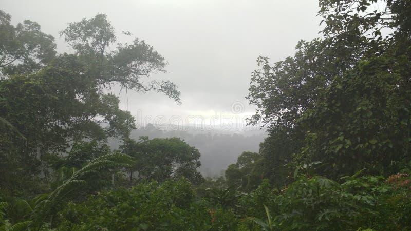 Regenwald, wenn es regnet lizenzfreie stockfotografie
