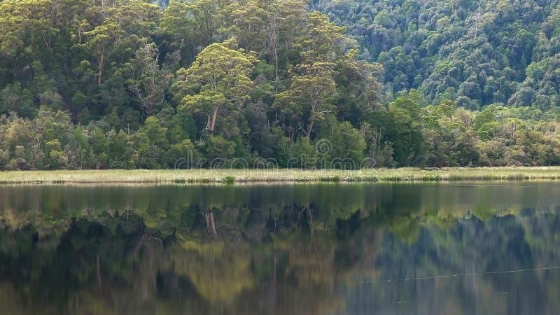 Regenwaldbaum und Gordon-Fluss in Tasmanien stockfoto