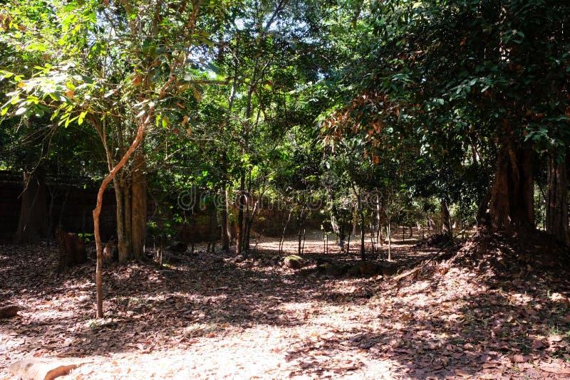 Regenwaldboden dicht gestreut mit trockenen Blättern Fragment einer alten Steinwand in einem tropischer Waldsonnigen Wetter lizenzfreie stockbilder
